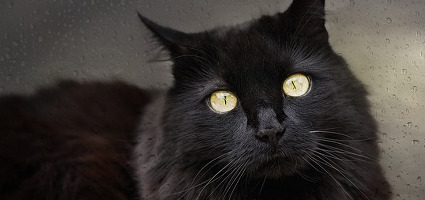 7 Ways Black Cats Bring Good Luck