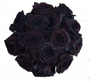 24 Stems - 2 Dozen Farm Fresh Black Roses Bouquet